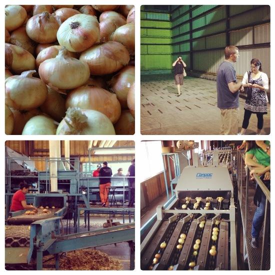 Vidalia Farm Tour #VisforVidalia www.InTheKitchenWithKP 2