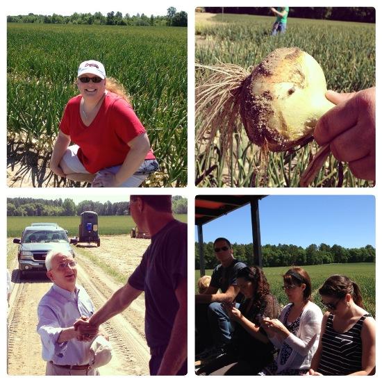 Vidalia Farm Tour #VisforVidalia www.InTheKitchenWithKP 3