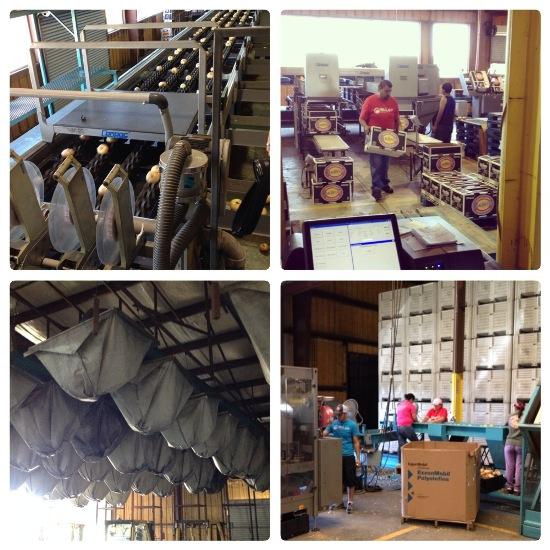 Vidalia Farm Tour #VisforVidalia www.InTheKitchenWithKP 7